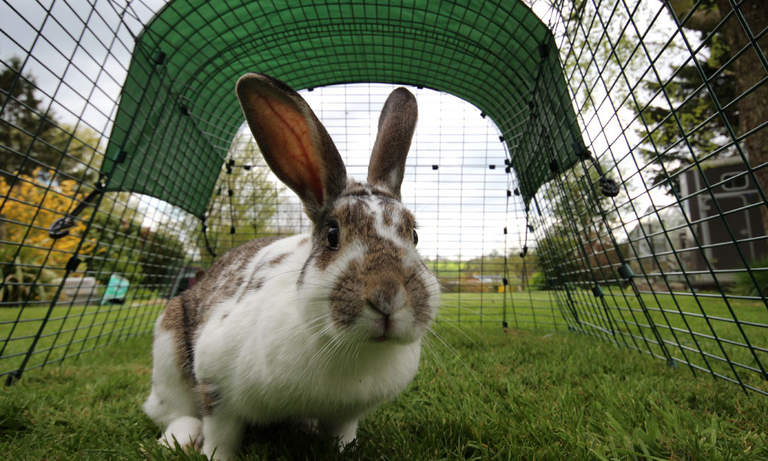 The rabbit run is spacious enough for your rabbits to hop around in
